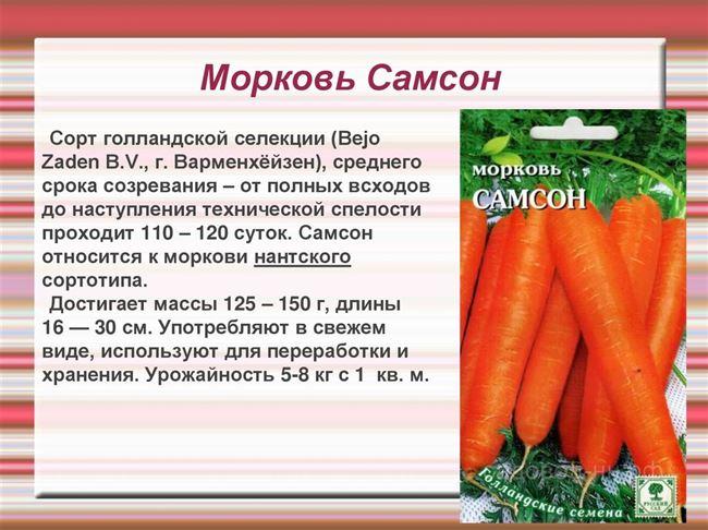 Размещение моркови на хранение и тара