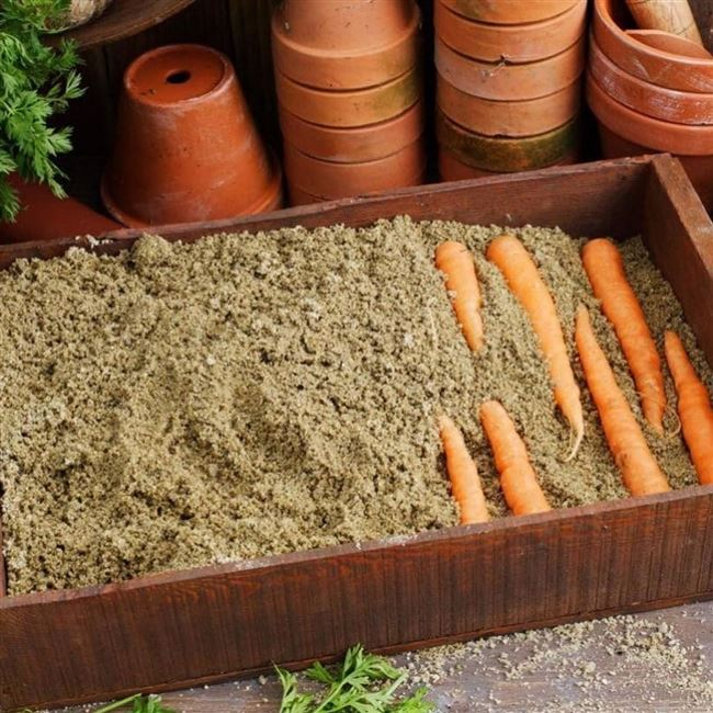Как правильно организовать хранение моркови