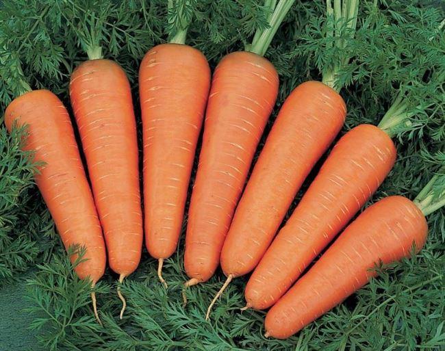 Морковь Юкон F1 описание сорта