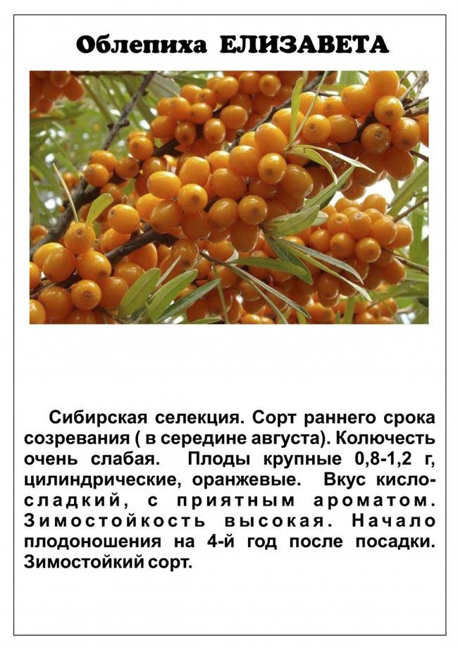 Область применения ягод