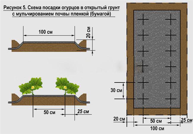 Схема и глубина посадки