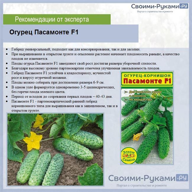 Описание лучших сортов огурцов для защищенного грунта — по отзывам садоводов