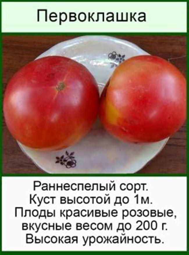 Описание и характеристика томата Первоклашка, отзывы, фото