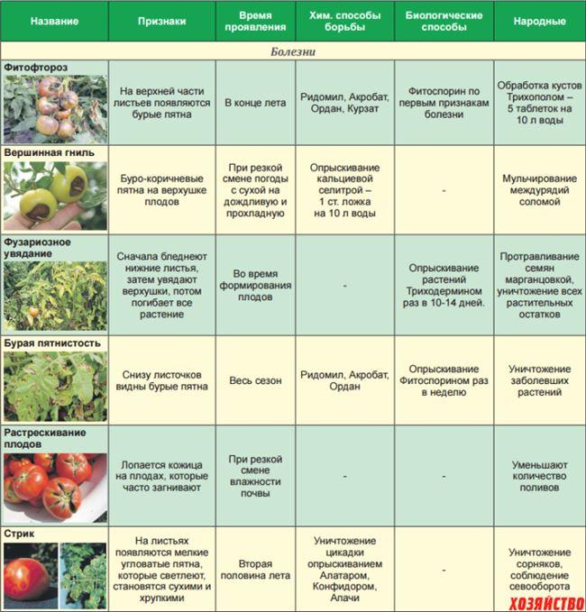 Болезни и вредители томата