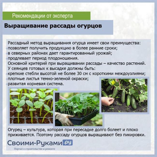 Высадка и уход за растением в открытом грунте