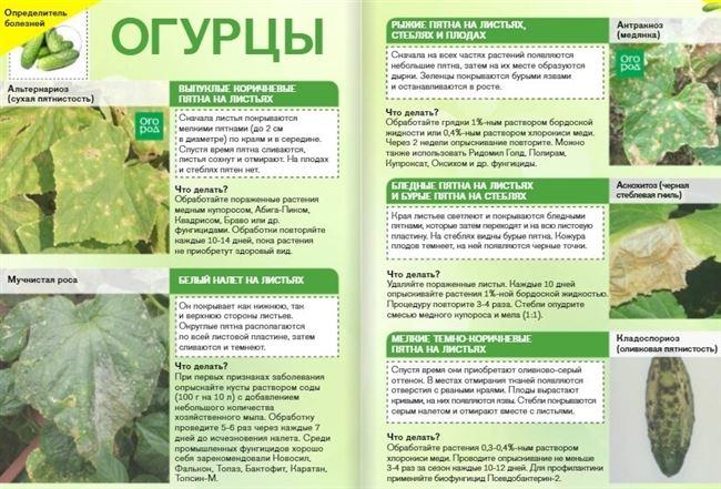 Таблица: основные заболевания и вредители огурцов сорта Маша