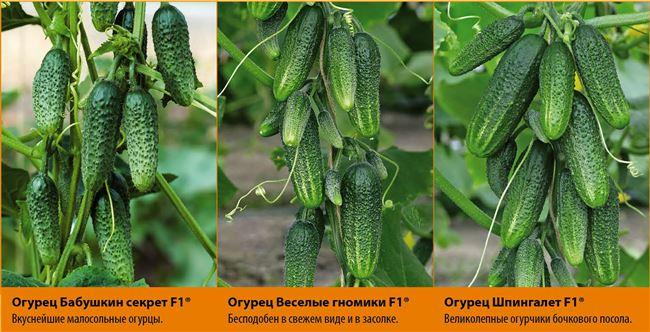 Секреты успешного выращивания