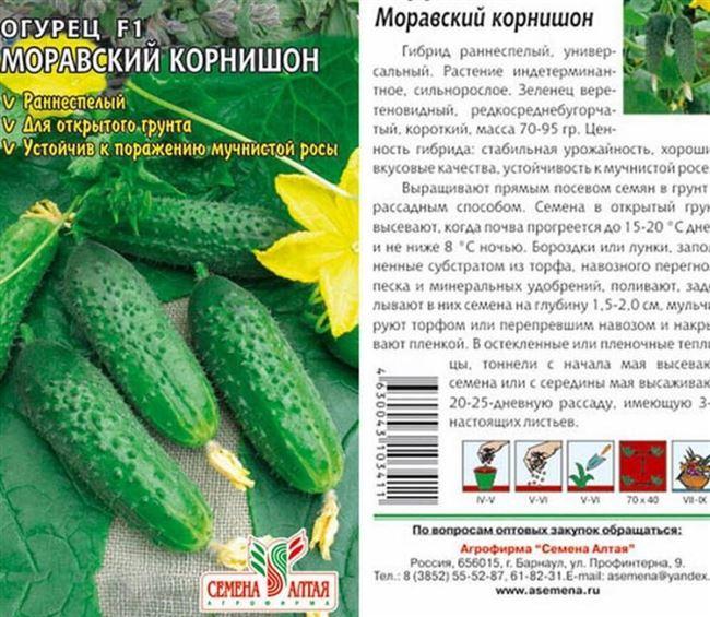 Описание растения и зеленцов представленного сорта