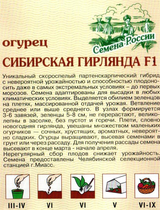 Всё об особенностях ухода и выращивания огурцов Сибирская гирлянда F1 + видео