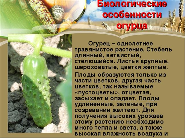 Описание внешнего вида куста растения