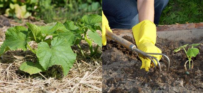Рыхление почвы и прополка