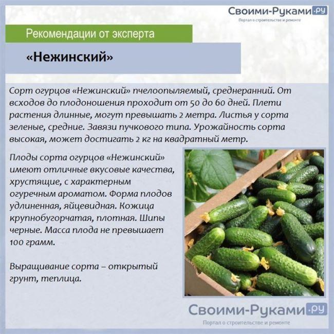 Подготовка и посадка семян