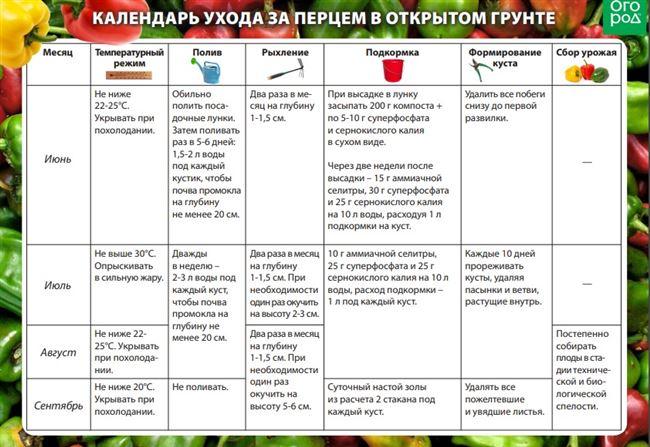 Сроки плодоношения и урожайность