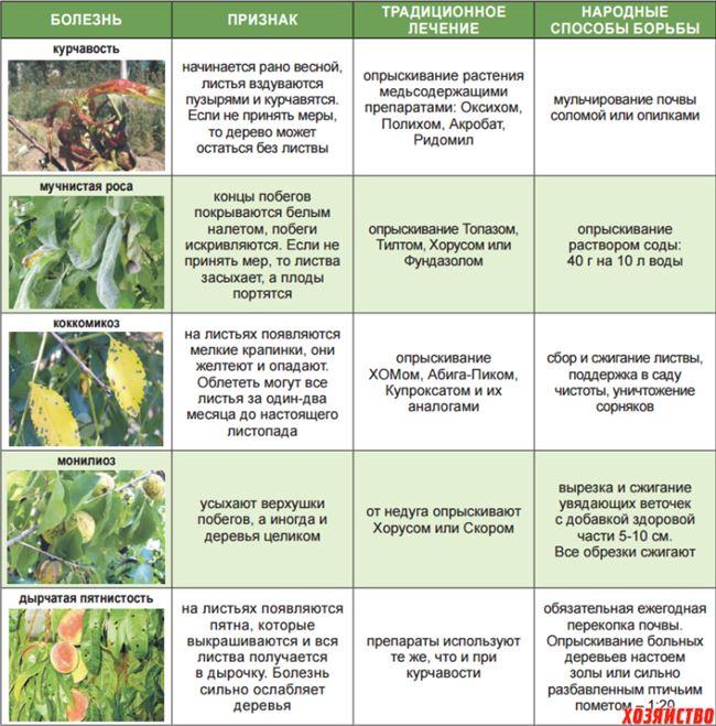 Таблица: болезни персика, лечение и профилактика