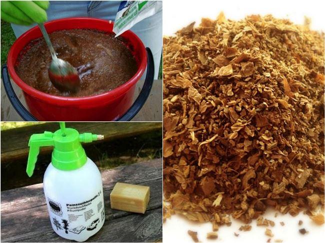 Видео: Приготовление табачного настоя