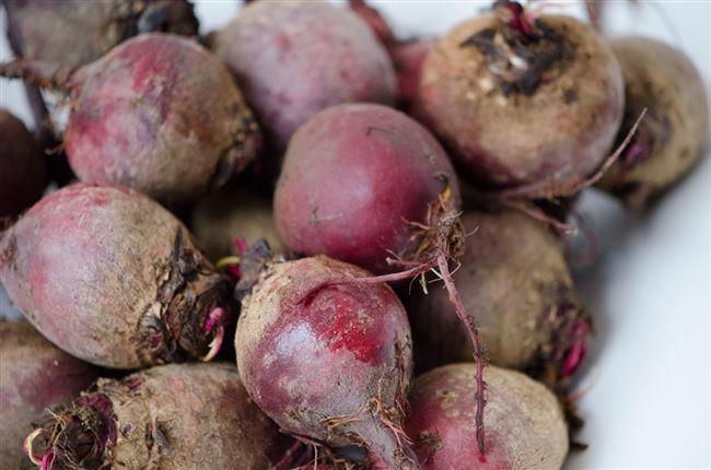 Почему стоит закладывать на хранение корнеплоды