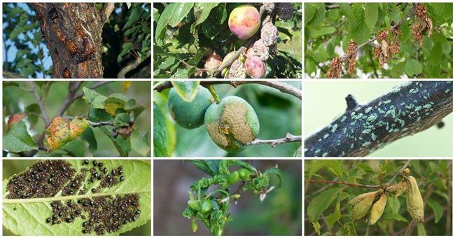 Агрохимические препараты