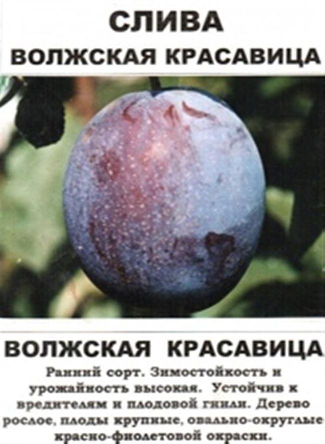 Таблица: болезни и вредители сливы Волжская красавица