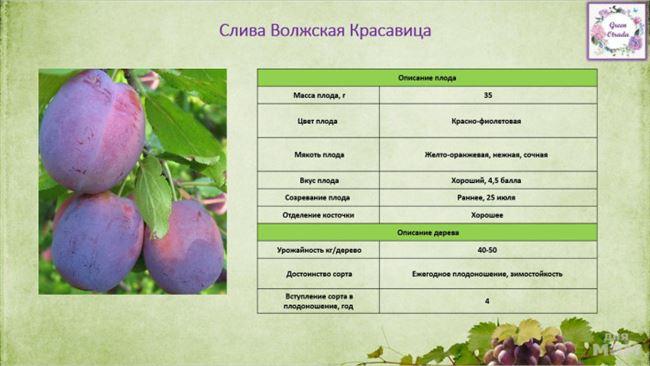 Таблица: состав и энергетическая ценность плодов Волжской красавицы