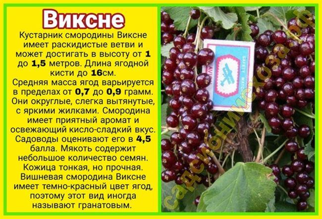 Транспортабельность и применение ягод