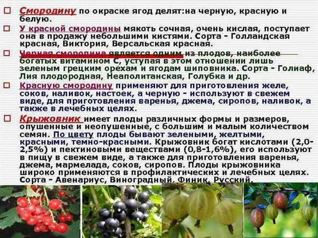 Размножение смородины семенами