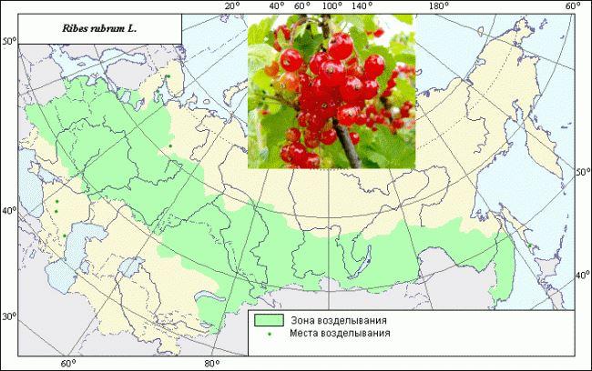 Регион произрастания и распространение