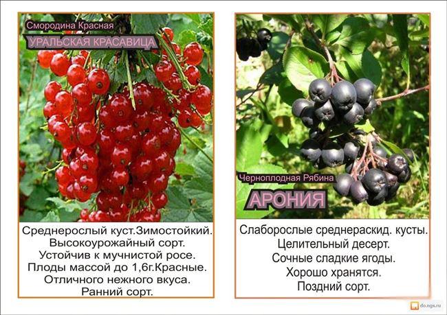 Размер ягоды, вкусовые качества