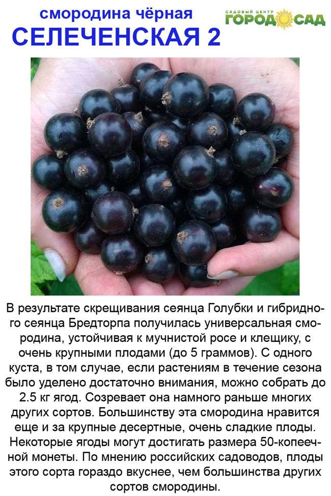 Характеристика ягод
