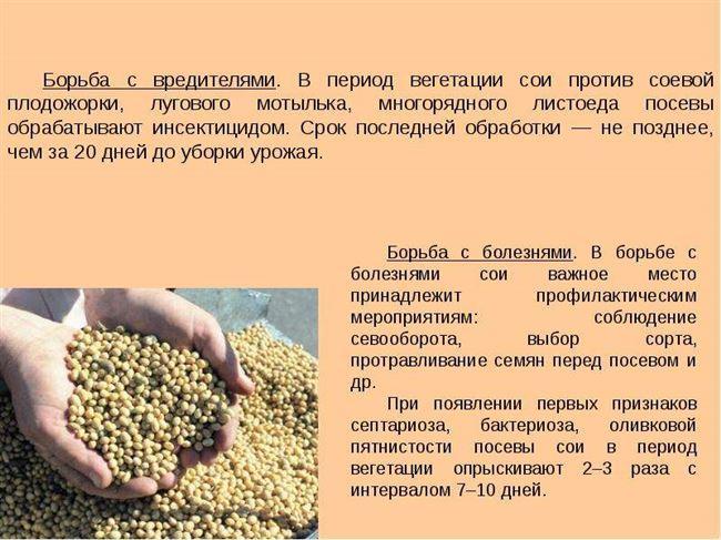 Посадка сои в открытом грунте