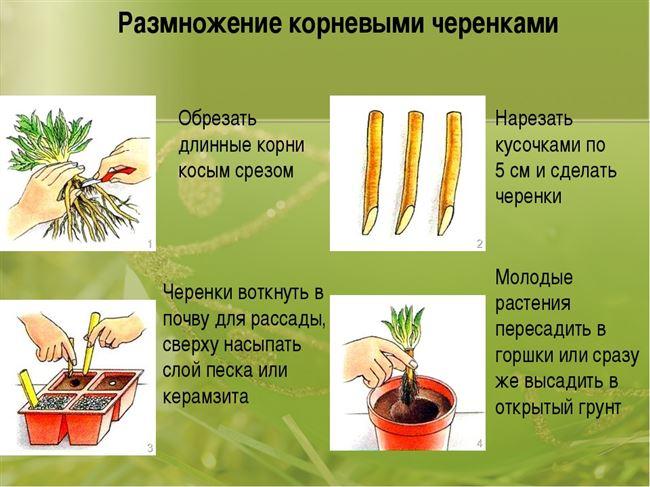 Размножение растения черенками и другими методами