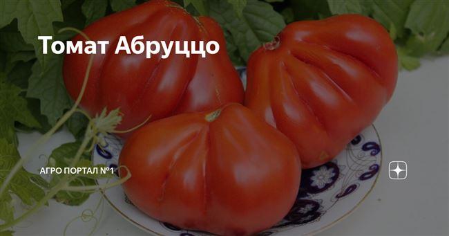 Описание и характеристика томата Абруццо, отзывы, фото