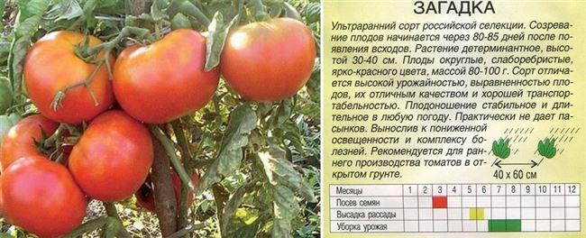 Описание и характеристики - Айша F1 - томат детерминантный, May Seed (Турция)