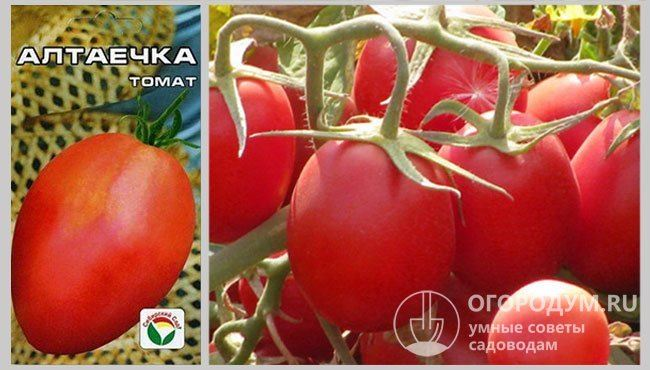 Описание и характеристика сорта томата Алтаечка, отзывы, фото