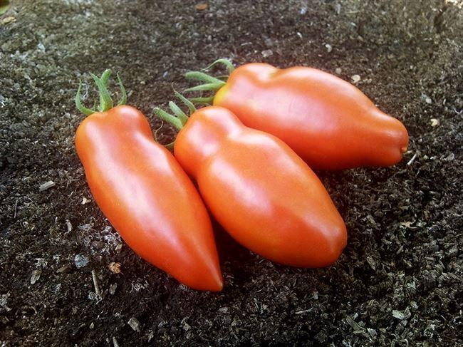 Таблица с характеристиками сорта томата Алый мустанг