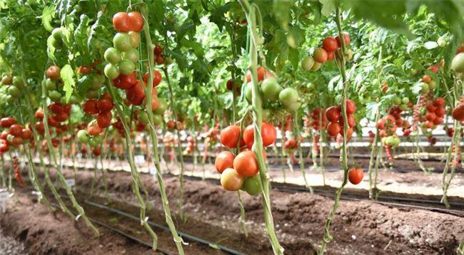 Как получить семена на следующий год?