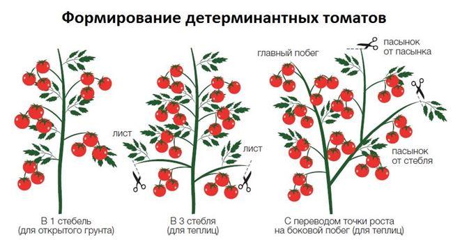 Формирование детерминантных томатов на видео