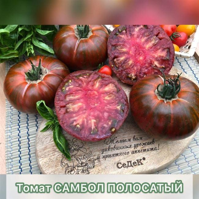 Пикирование томатов