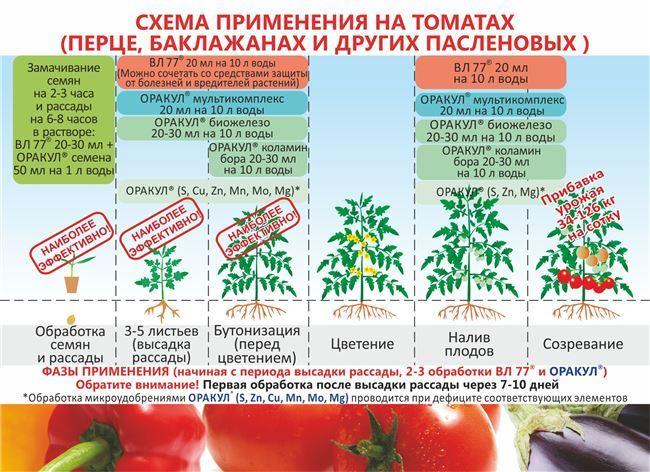 Особенности выращивания помидоров Афродита, посадка и уход