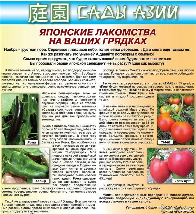 Процесс выращивания и ухода за томатом в теплице