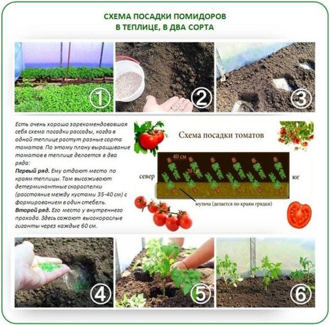 Посев и выращивание рассады
