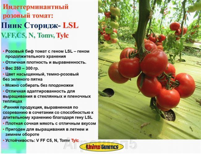 Посадка томатов Благовест на рассаду и пересадка на постоянное место роста