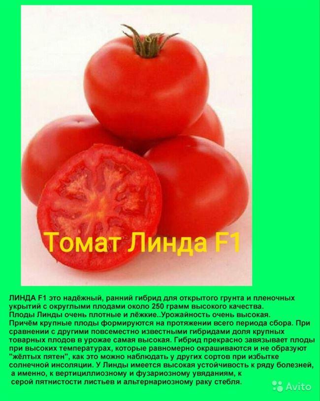 Основные качества плодов, фото в разрезе
