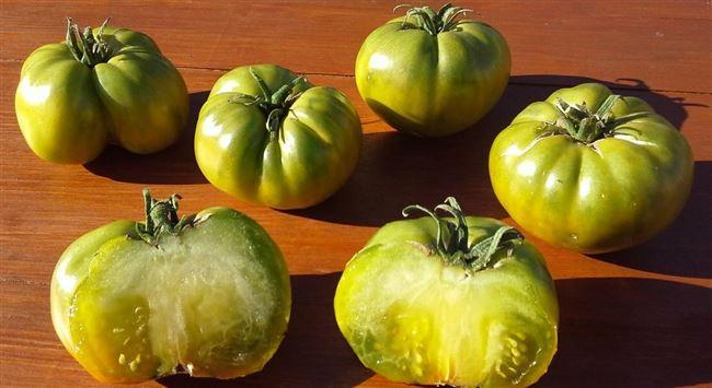 Урожайность томата «Болото»