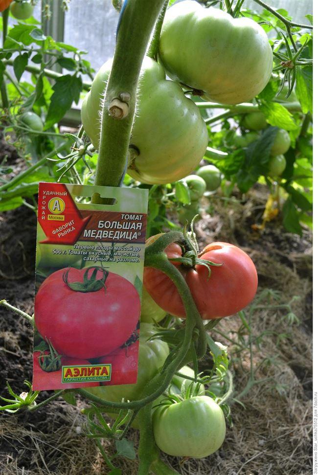 Отзывы любителей томатов