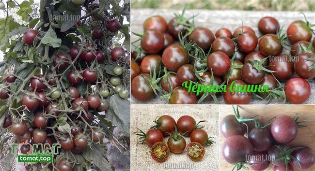 Формирование высокорослых сортов томатов, видео