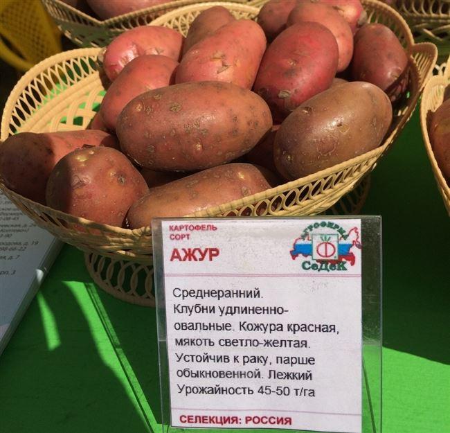 Характеристика сорта «Ивановские»