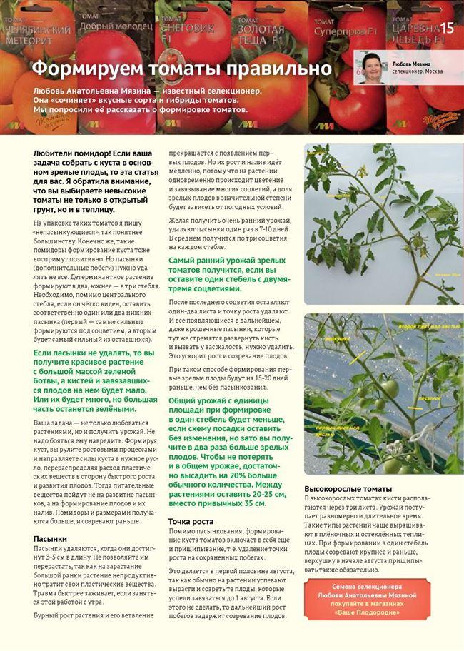От каких факторов зависит развитие томата