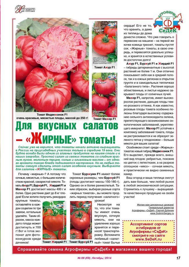 Урожайность томата Вова Путин и плодоношение
