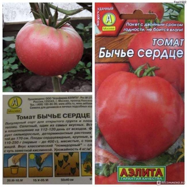 Характеристики томатов и сорта