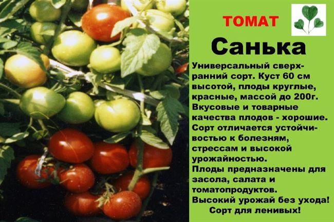 Уход за томатами Санька